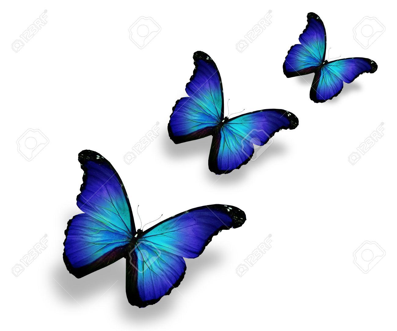 <<<Poemas de colores...>>> - Página 2 13997257-Tres-mariposas-azules-aislados-en-blanco-Foto-de-archivo