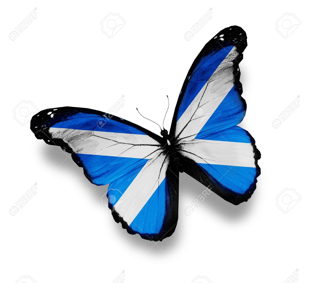 flag of scotland butterfly isolated on white stock photo picture