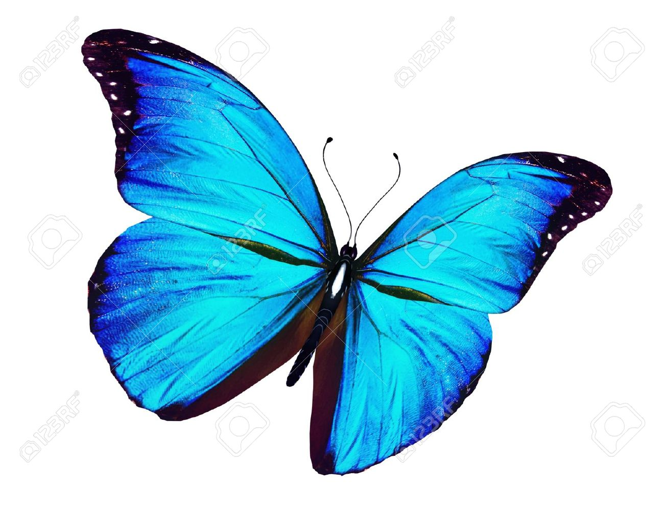 Blue Butterfly Flying, Isolated On White Background Stock Photo ...