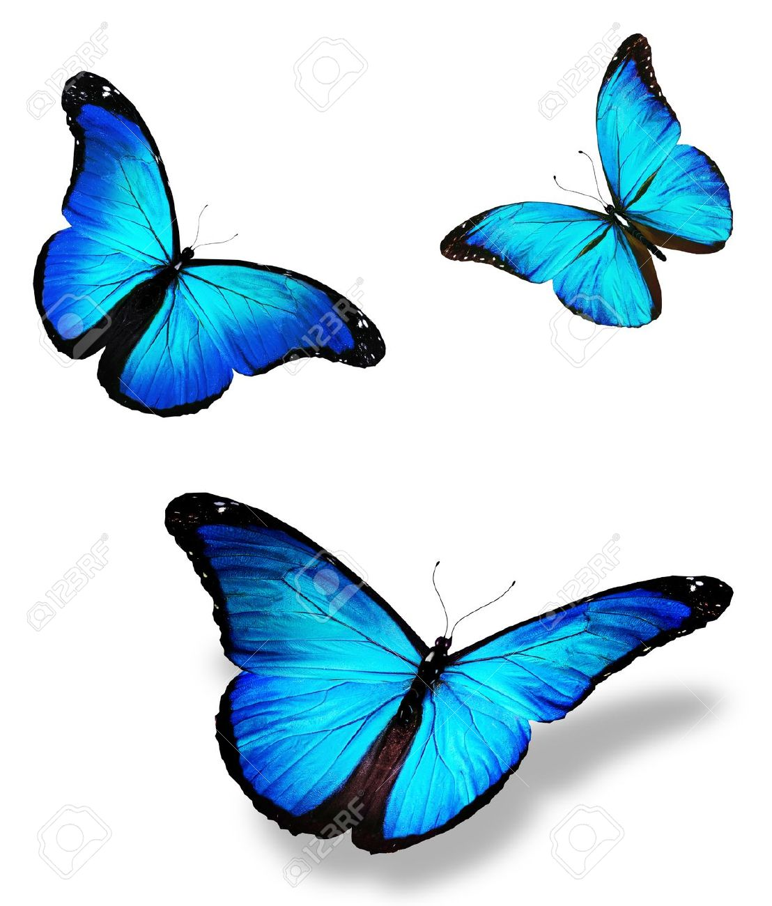 Three Blue Butterfly Stock Photo Picture And Royalty Free Image