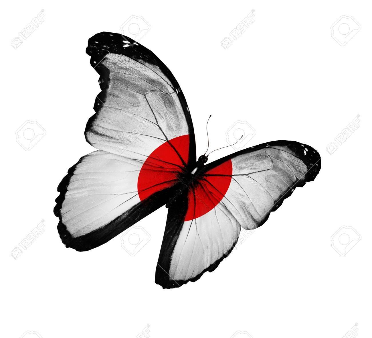 japanese flag butterfly flying isolated on white background stock