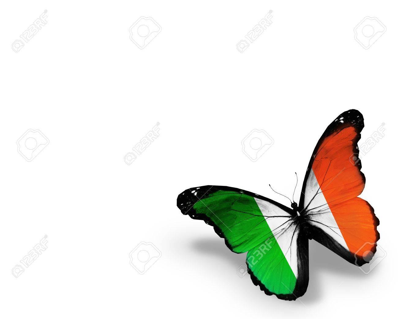 irish flag butterfly isolated on white background stock photo