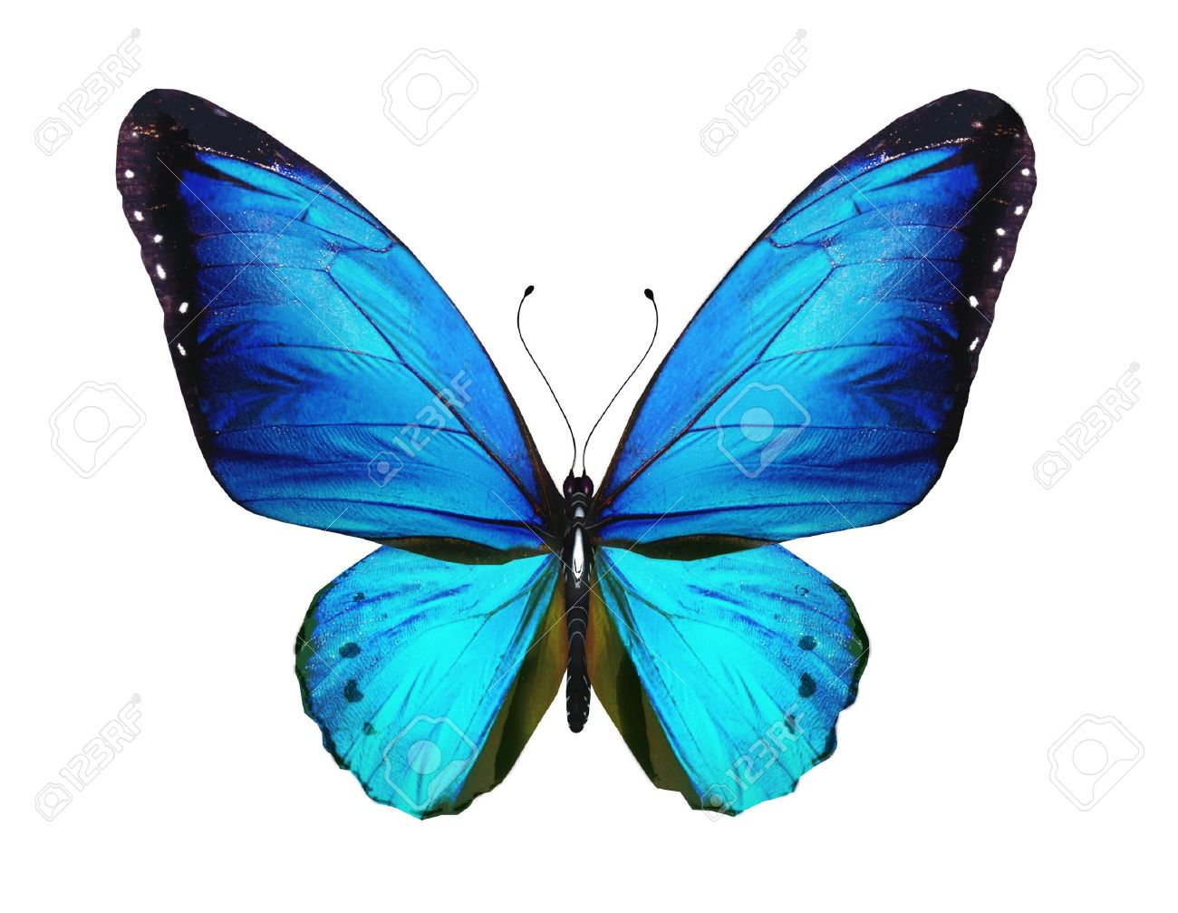 Blue Butterfly Isolated On White Background Stock Photo Picture