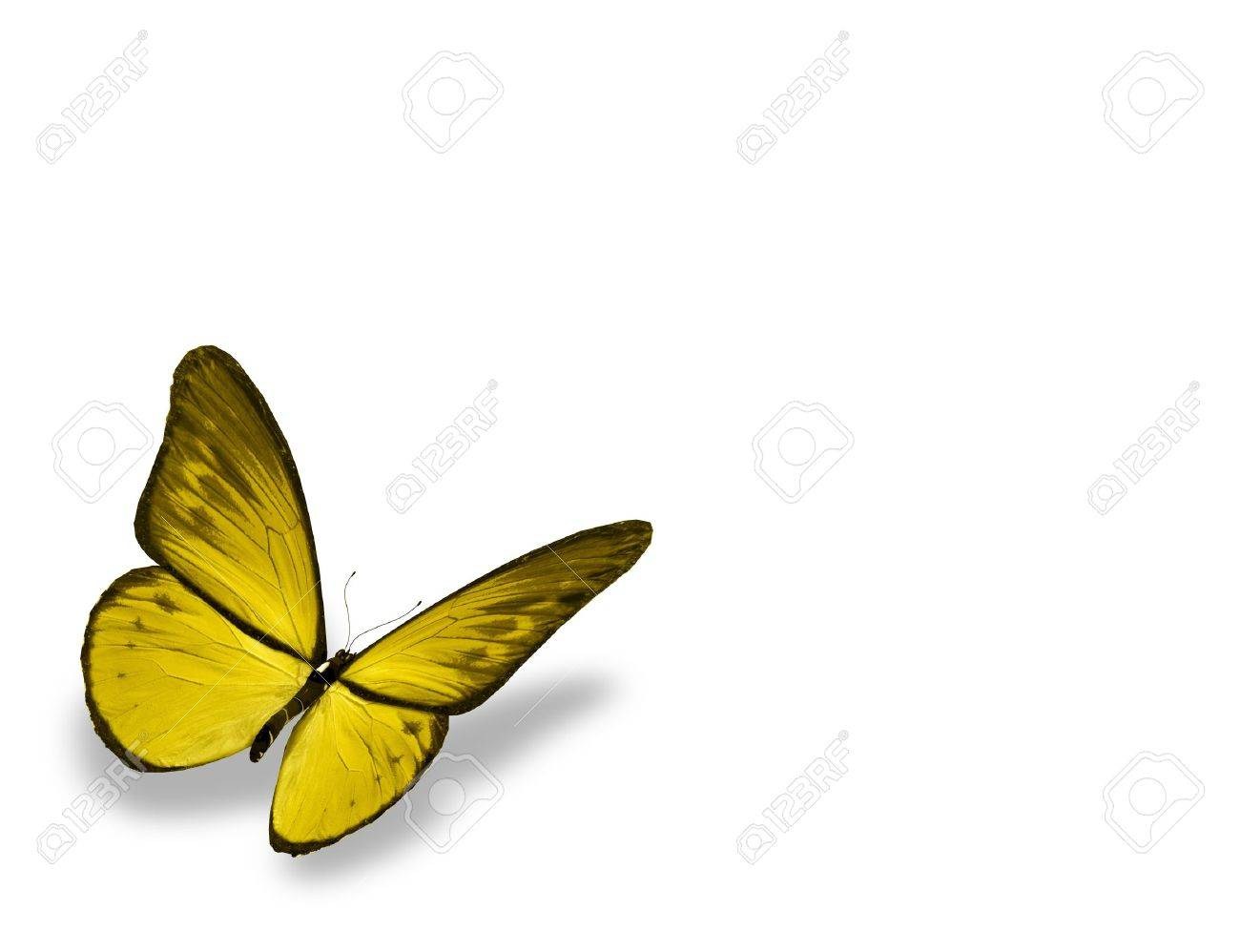 Yellow butterfly , isolated on white background Stock Photo - 15192016
