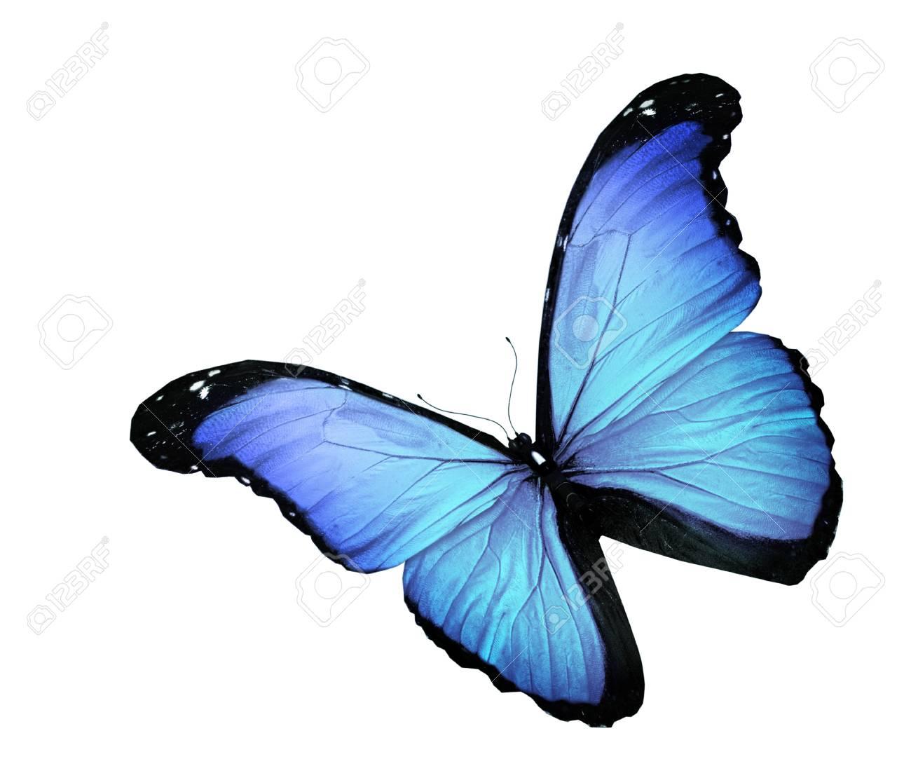 Immagini Stock Farfalla Blu Su Sfondo Bianco Image 15192060