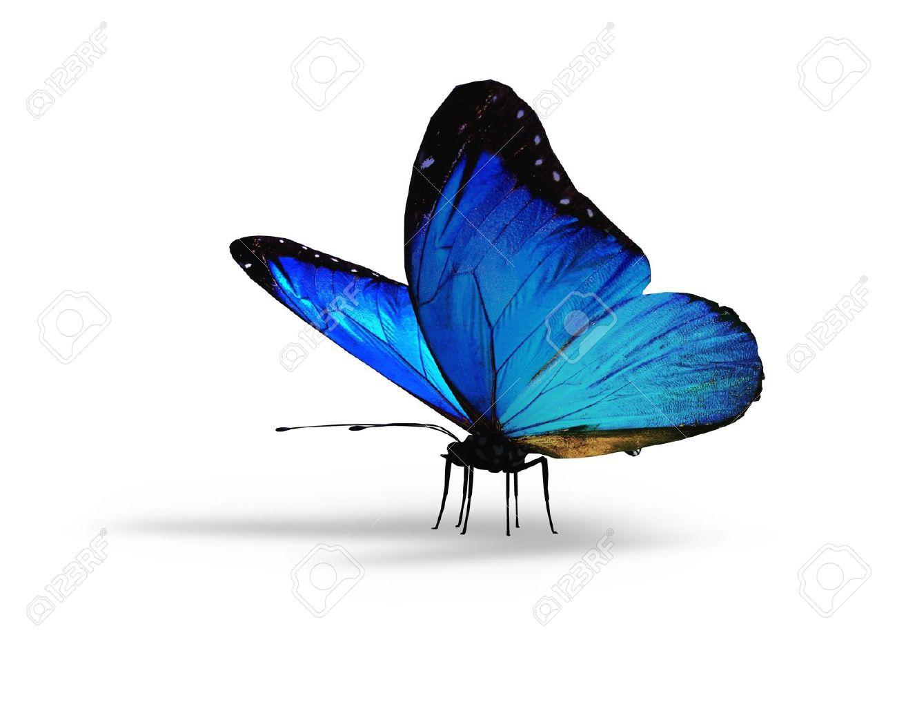白地に青い蝶 ロイヤリティーフ...