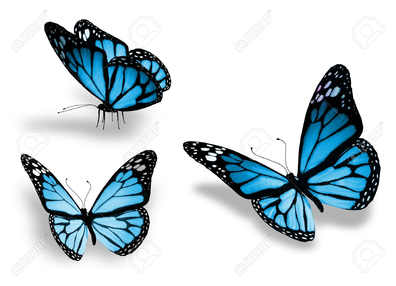 Image result for blue butterflies