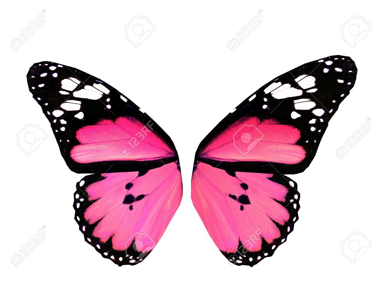 Aile De Papillon ailes de papillon rose, isolé sur fond blanc banque d'images et