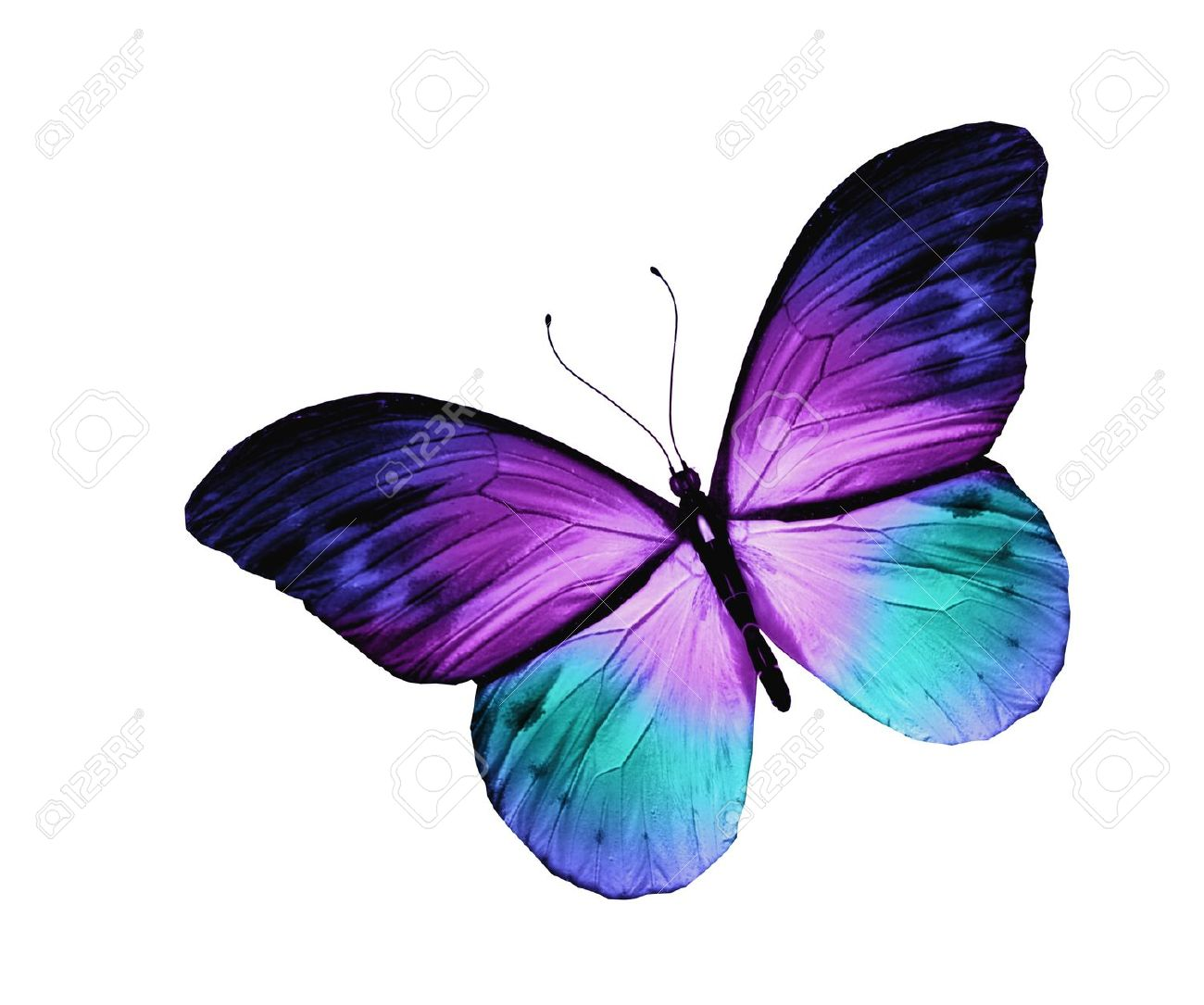 Violet blue butterfly isolated on white stock photo picture and violet blue butterfly isolated on white stock photo picture and violet pinterest blue butterfly violets and butterfly buycottarizona