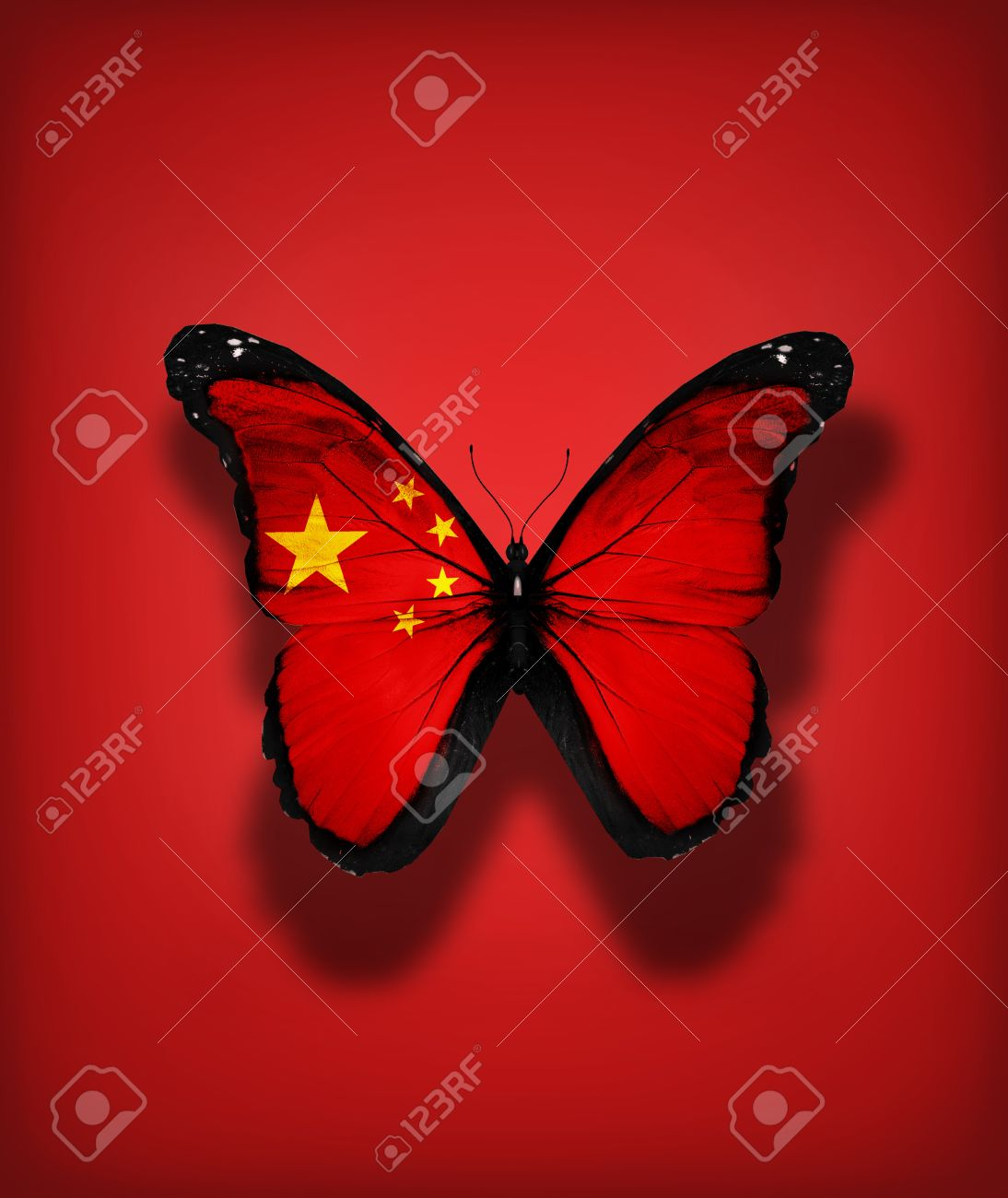 chinese flag butterfly isolated on flag background stock photo