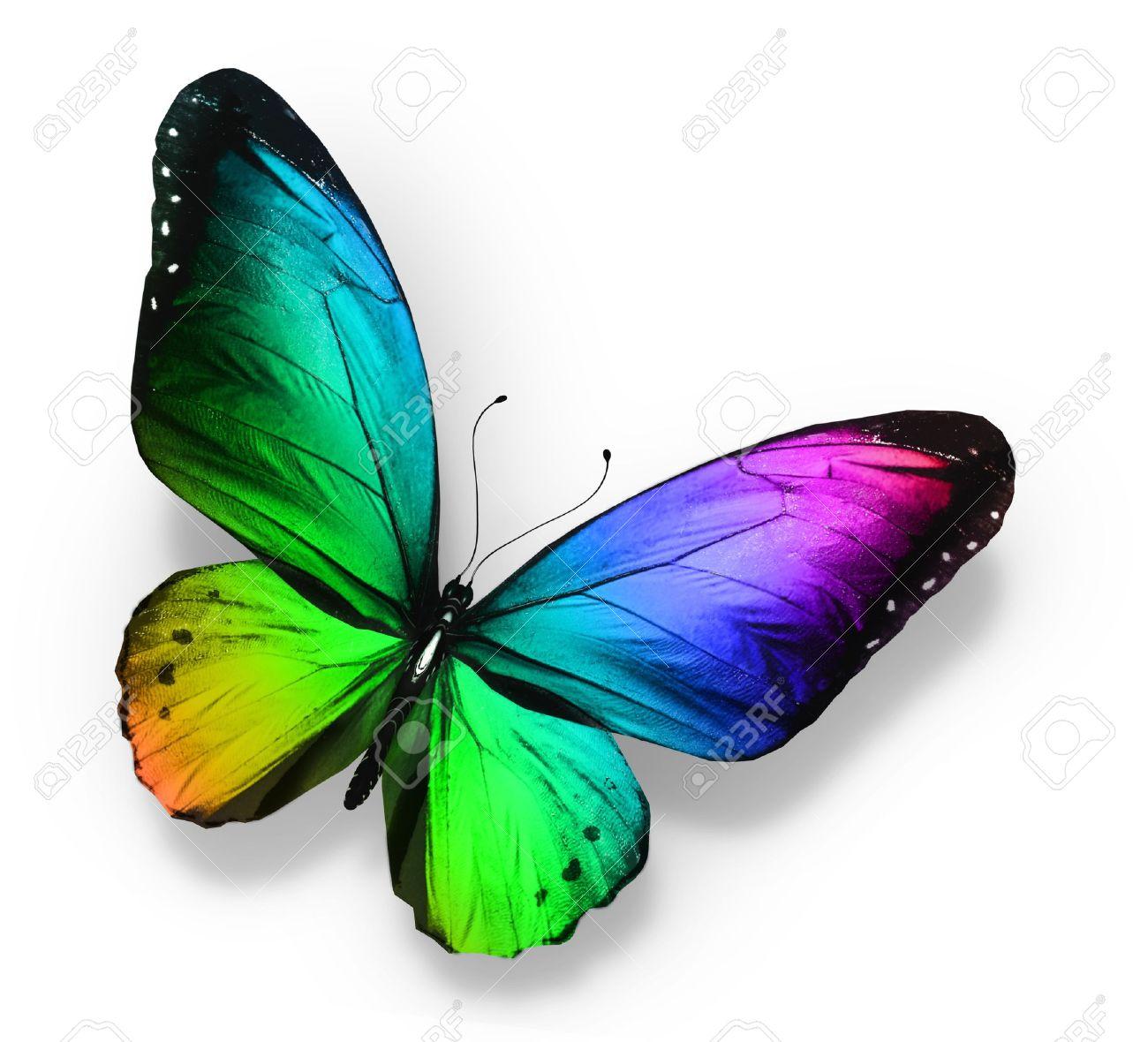mariposas de colores color de la mariposa aislado en blanco foto de archivo