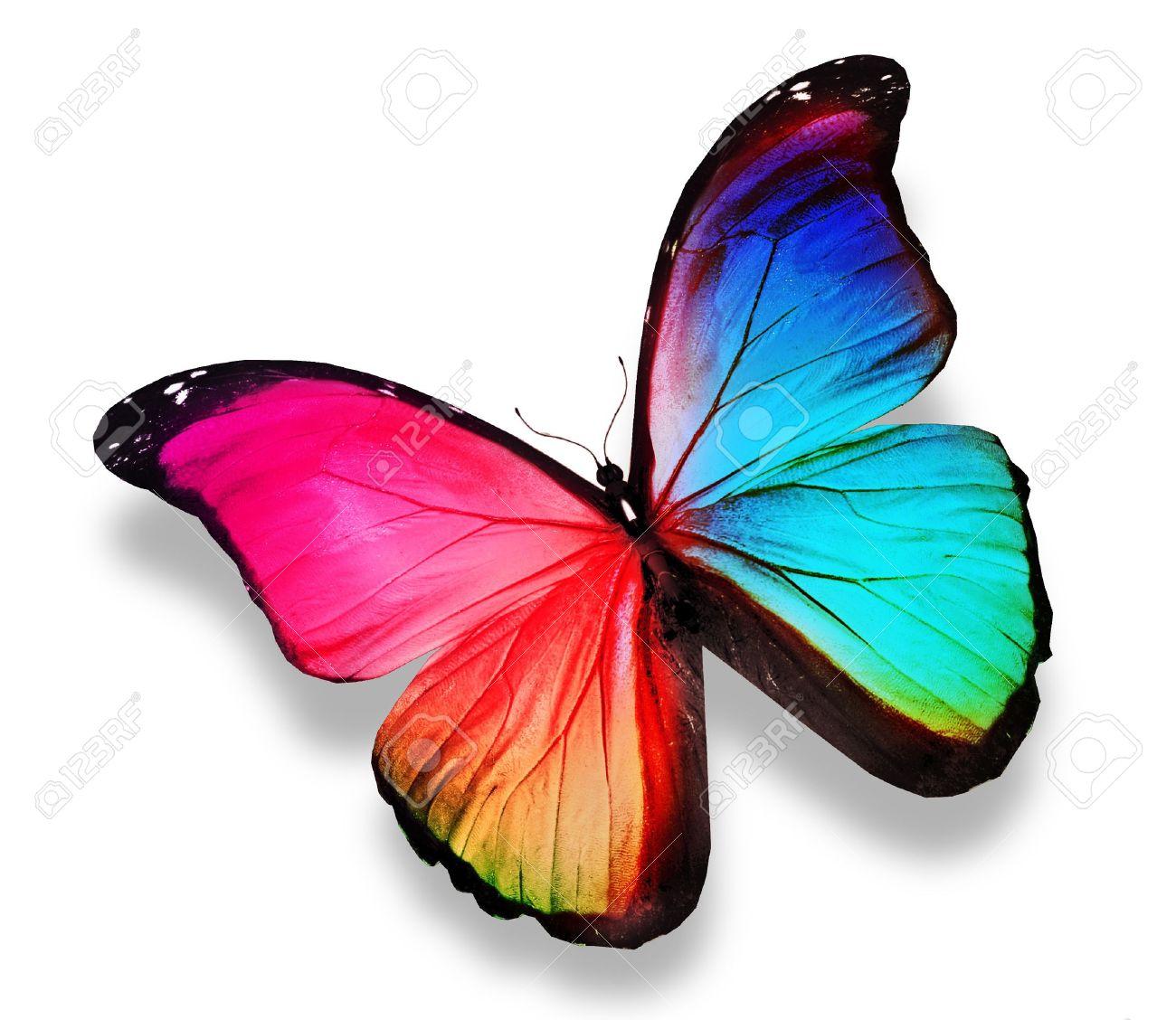 Morpho Papillon Couleur, Isolé Sur Blanc Banque D'Images Et Photos