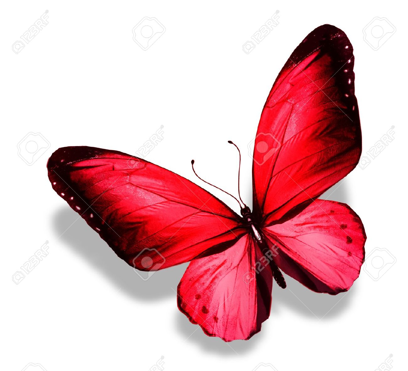 big butterfly images u0026 stock pictures royalty free big butterfly