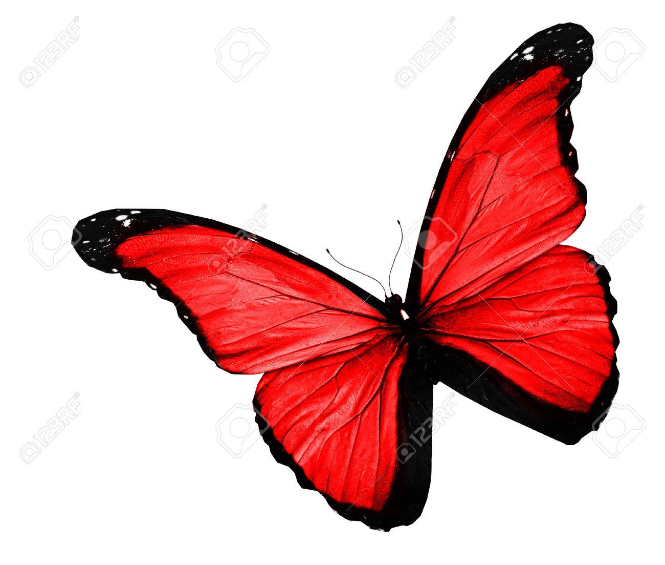 """Résultat de recherche d'images pour """"red butterfly"""""""
