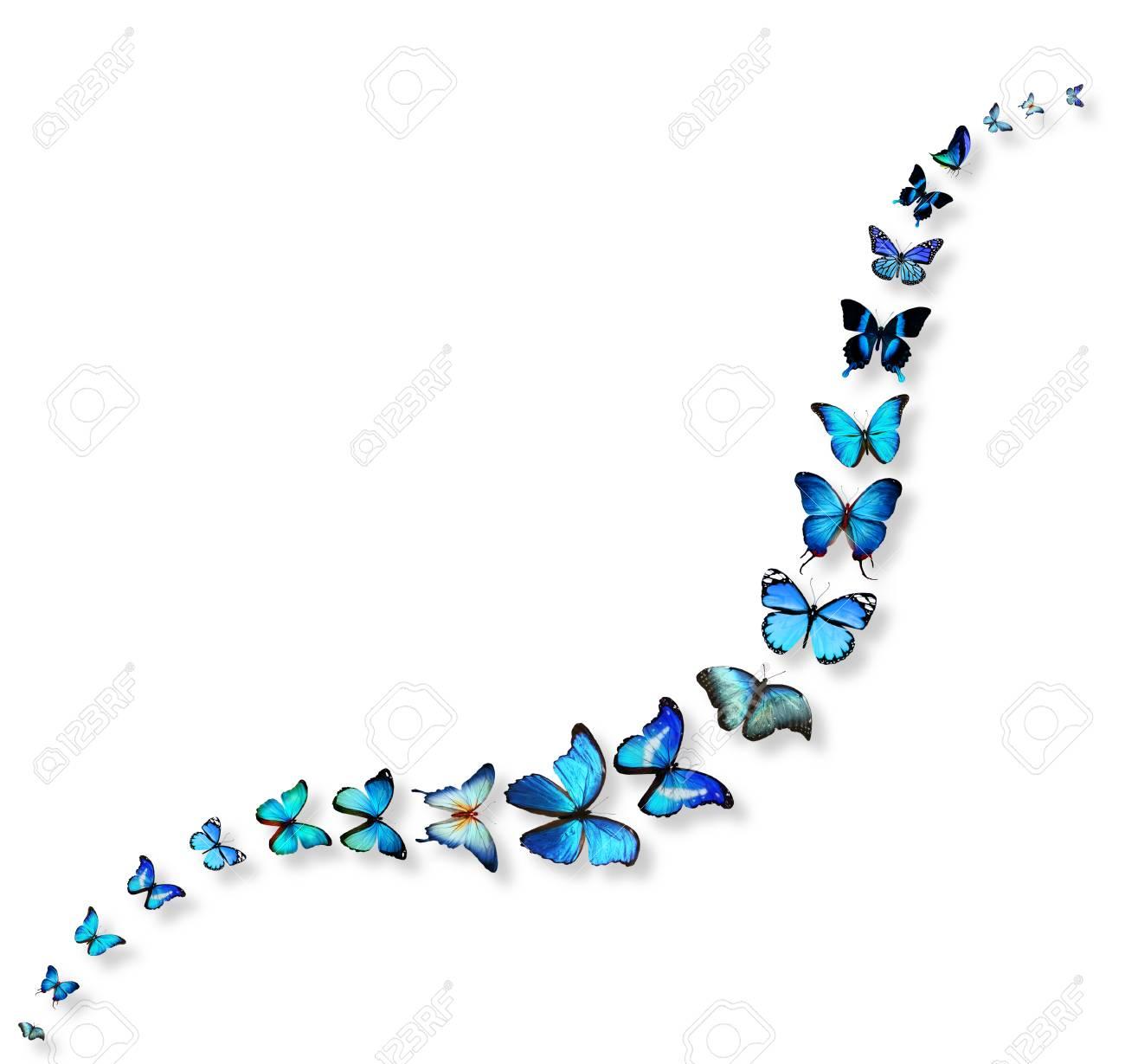 La Línea Ondulada De Las Mariposas Fotos, Retratos, Imágenes Y ...