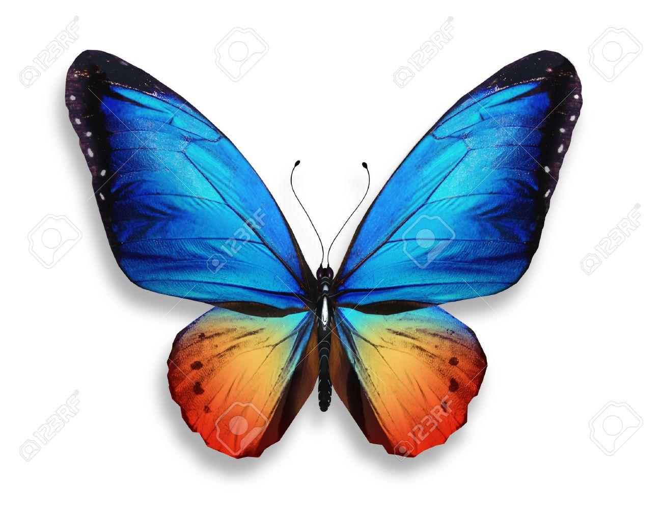 Bonito Páginas En Color De Mariposas Modelo - Dibujos Para Colorear ...
