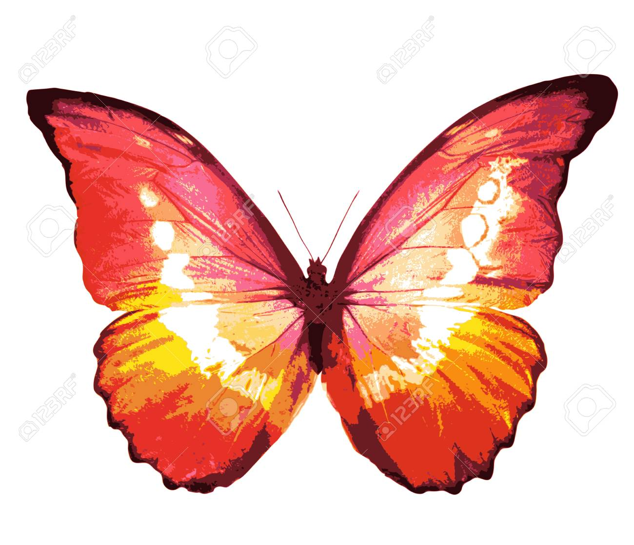 Couleur Papillon, Isolé Sur Blanc Banque D'Images Et Photos Libres