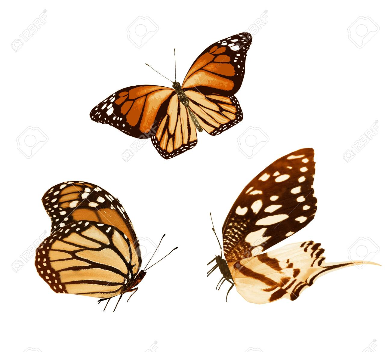 Color butterflies , isolated on white background - 136403473