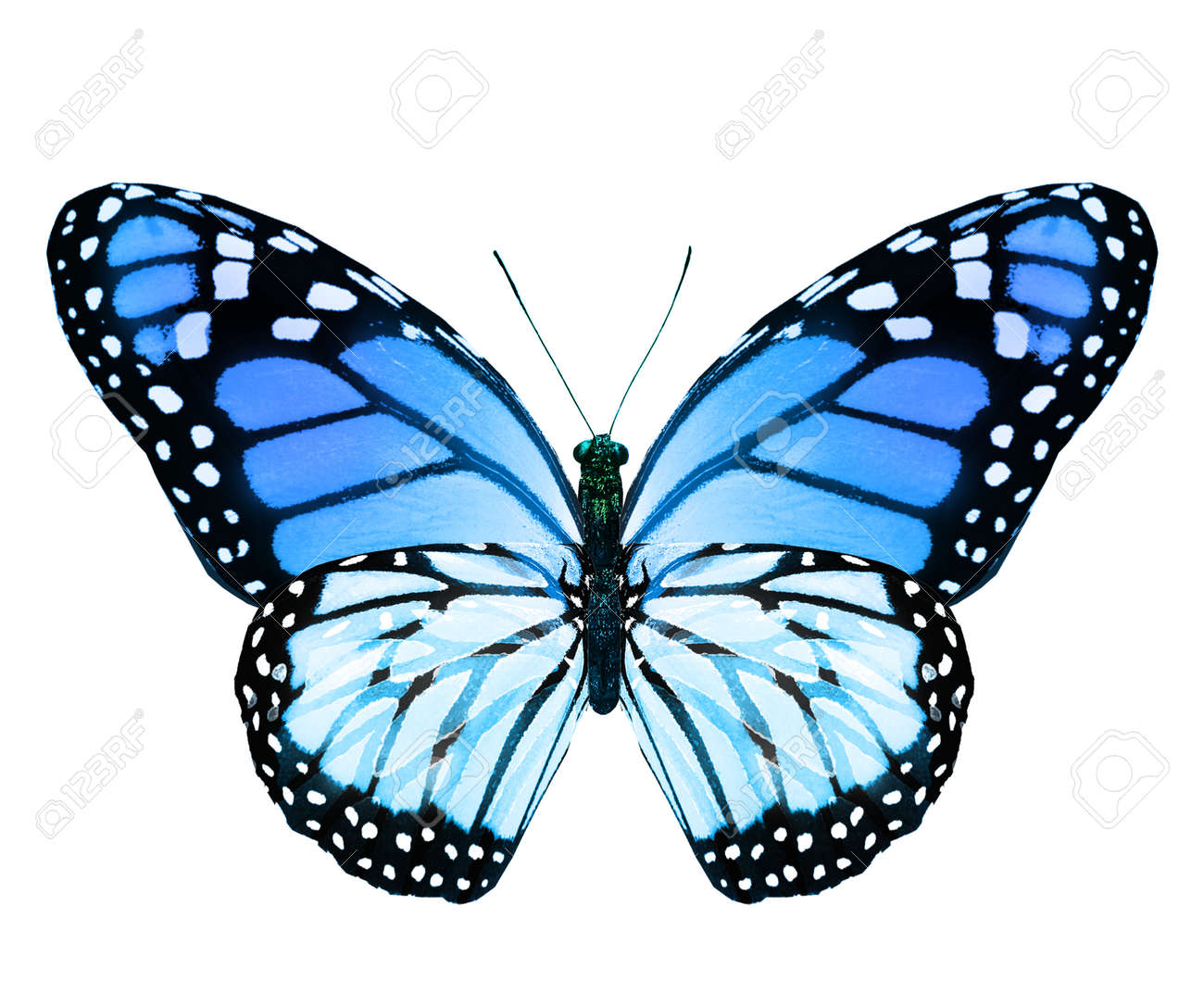 Color monarch butterfly, isolated on the white background - 165118774