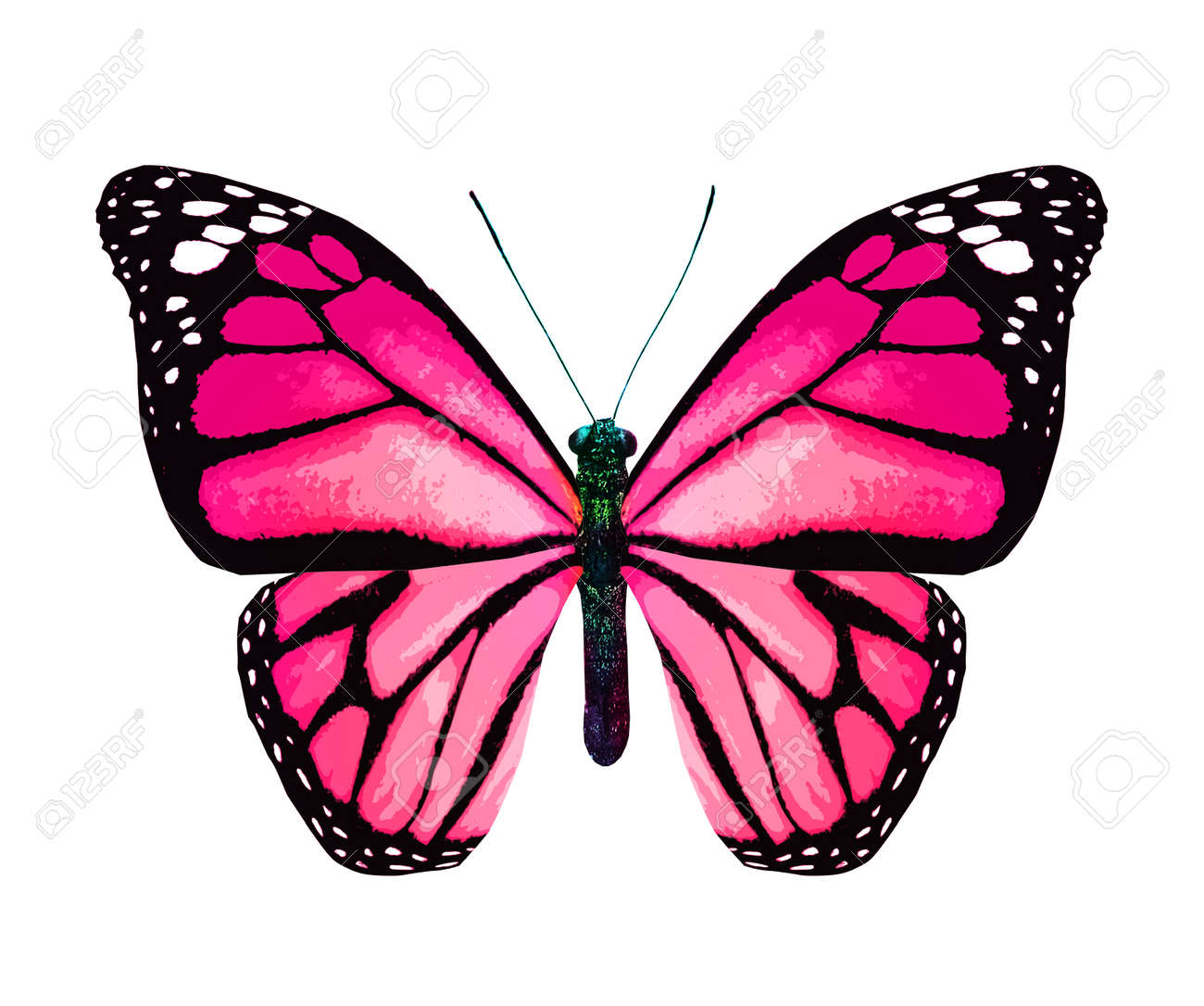 Color monarch butterfly, isolated on the white background - 165272786