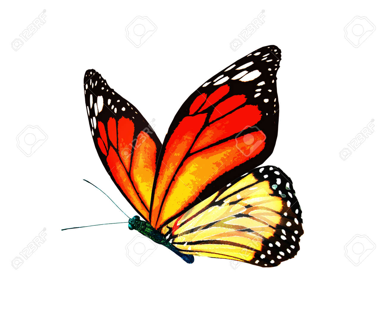 Color monarch butterfly, isolated on the white background - 166203958