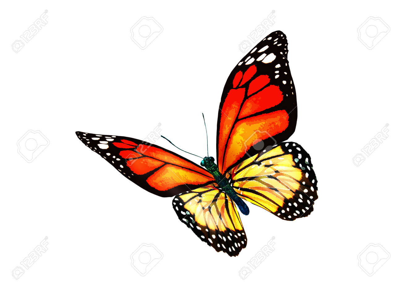 Color monarch butterfly, isolated on the white background - 167269258