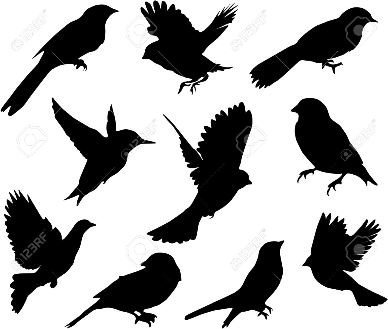 Set Birds Vector