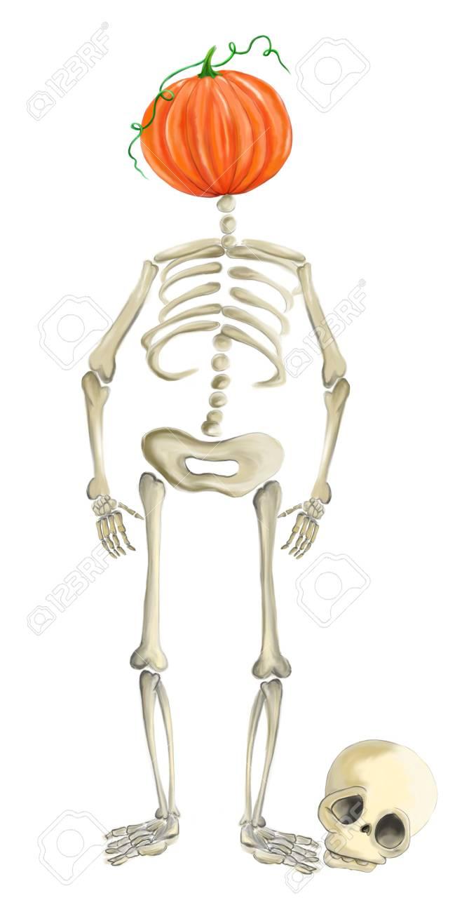 Tolle Menschliche Skelett Vorlage Ideen - Entry Level Resume ...