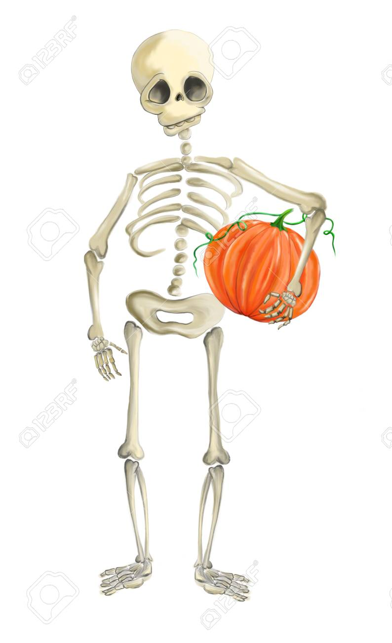 Illustrated Human Skeleton With Pumpkin Halloween Stock Photo
