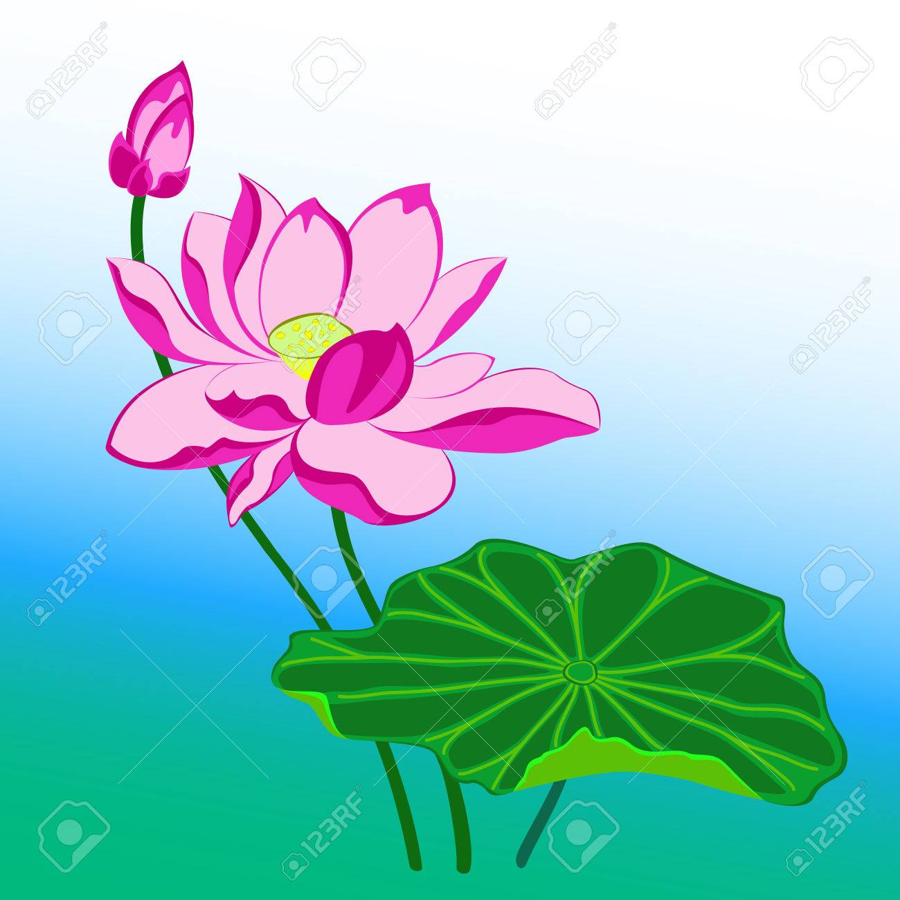 Pink Lotus Flower With Leaf And Bud Royalty Free Cliparts Vectors