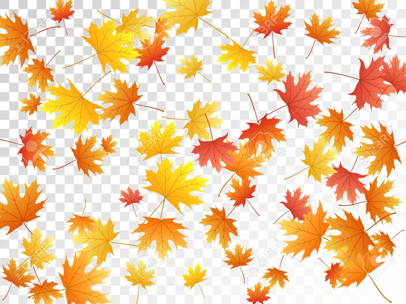 Maple Leaves Vector Autumn Foliage On Transparent Background Royalty Free Cliparts Vectors And Stock Illustration Image 123051707