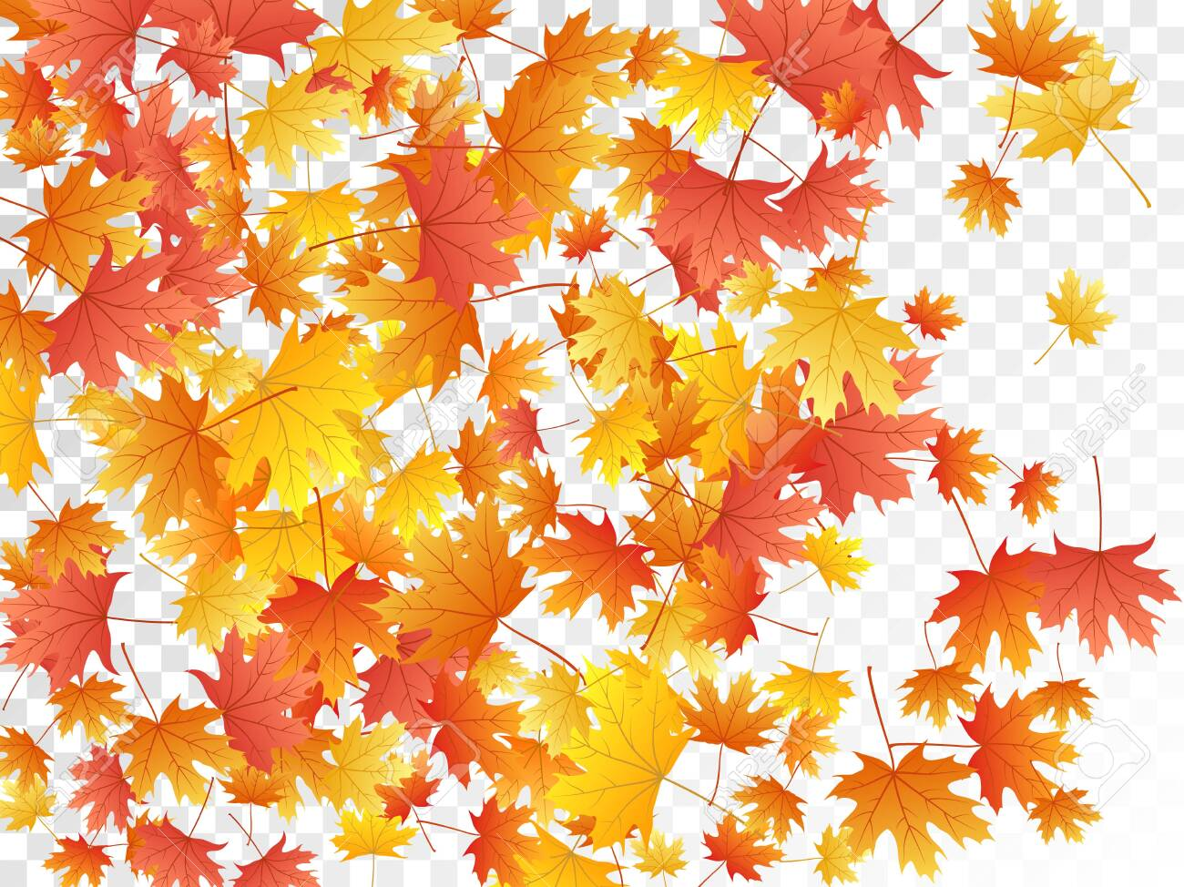 Maple Leaves Vector Autumn Foliage On Transparent Background Royalty Free Cliparts Vectors And Stock Illustration Image 131339134