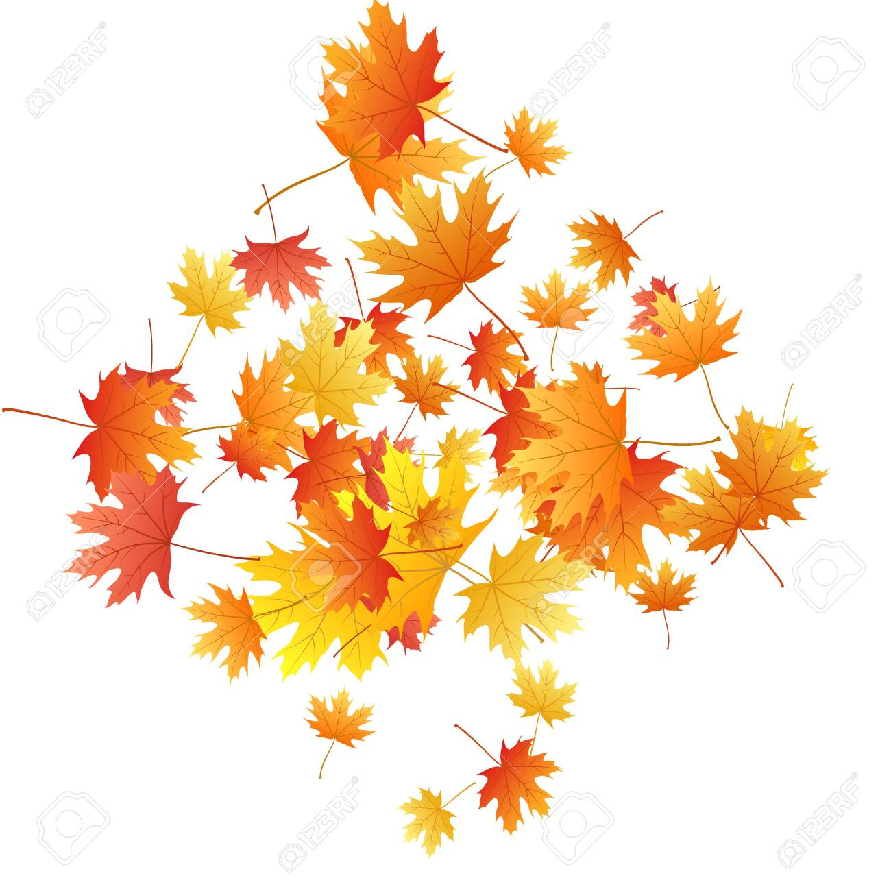 Maple leaves vector background, autumn foliage on white graphic design. Canadian symbol maple red yellow gold dry autumn leaves. Fancy tree foliage vector october season specific background. - 134780939
