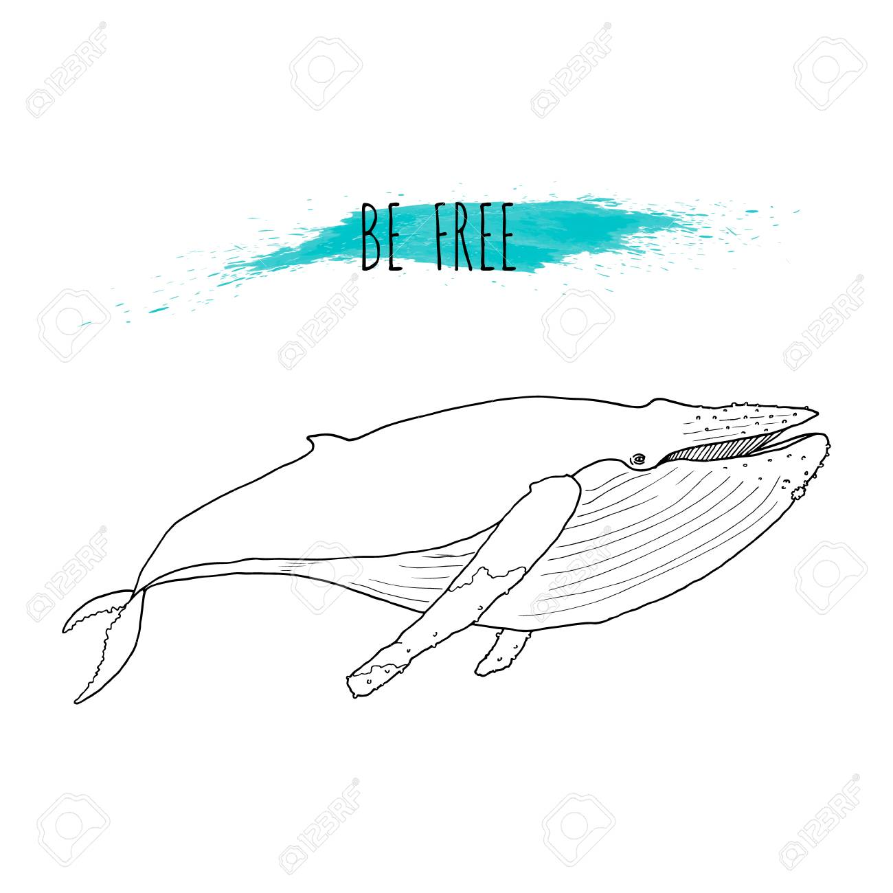 Illustration Vectorielle De Baleine A Bosse Dessines A La Main