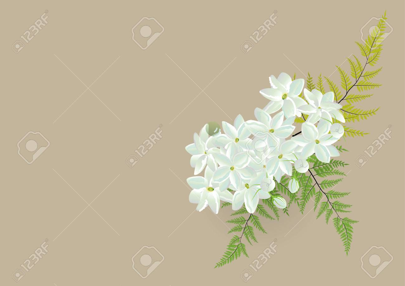 Jasmine bouquet with fern white flowers bouquet isolated picture jasmine bouquet with fern white flowers bouquet isolated picture ctor illustration stock vector izmirmasajfo Image collections