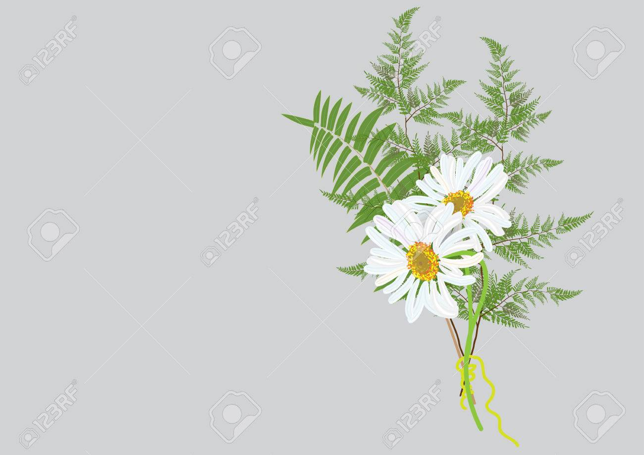 White daisy flowers bouquet with fern and jasmine flower isolated vector white daisy flowers bouquet with fern and jasmine flower isolated picture on background izmirmasajfo Image collections
