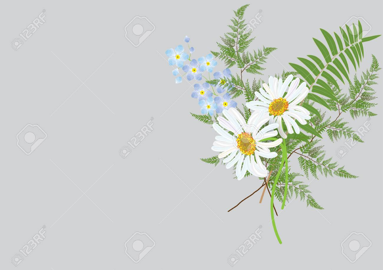 white Daisy Flowers Bouquet With Fern And Jasmine Flower . Isolated ...