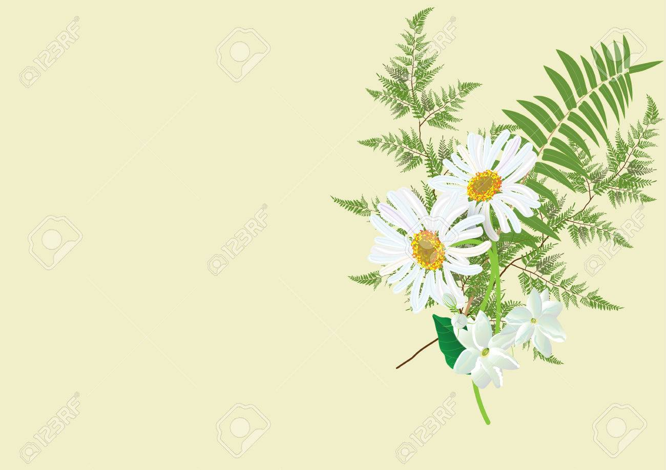 White daisy flowers bouquet with fern and jasmine flower isolated vector white daisy flowers bouquet with fern and jasmine flower isolated picture on background izmirmasajfo