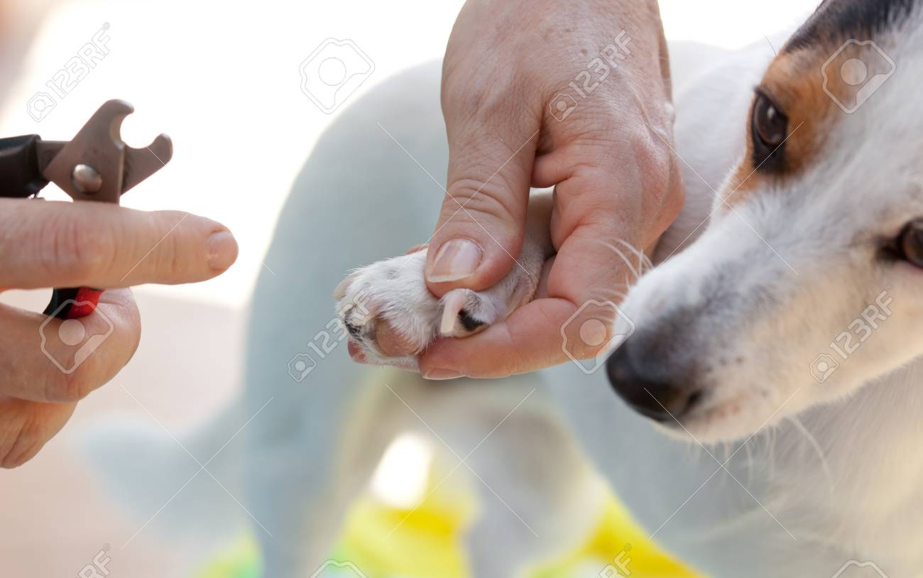 Shears for cutting the nails of the dog. Stock Photo - 22807956