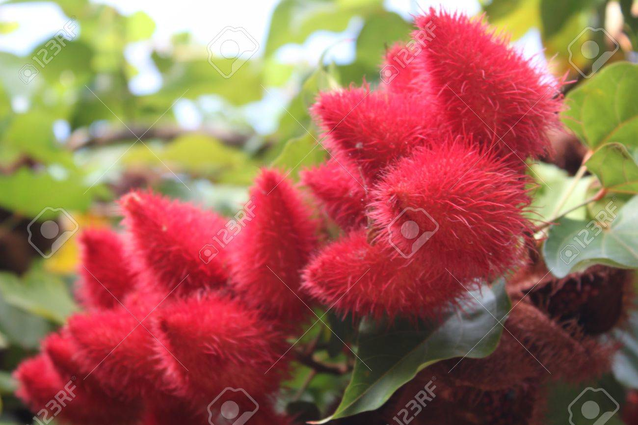 red hairy exotic fruit, thailand, southeast asia stock photo