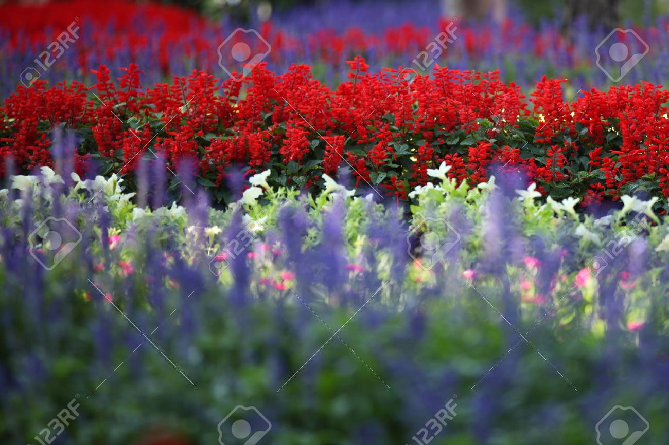 Blooming Bright Colored Flowers, Thailand, South East Asia Stock ...