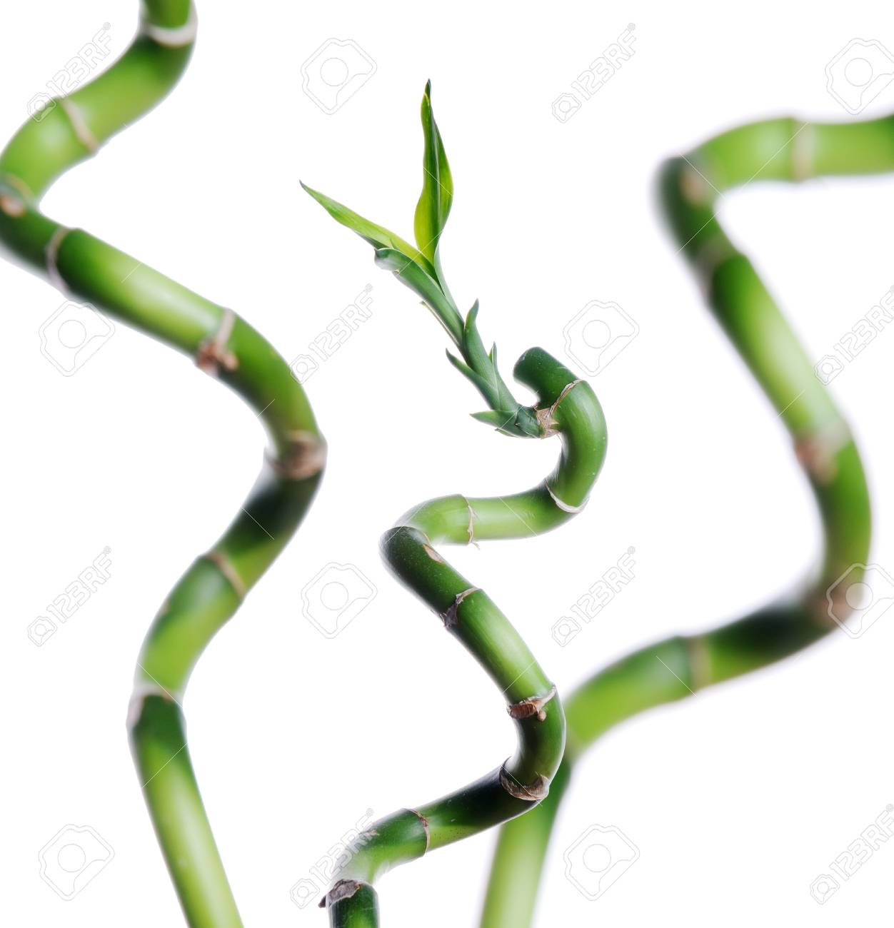 Lucky bamboo isolated on white Stock Photo - 6206882