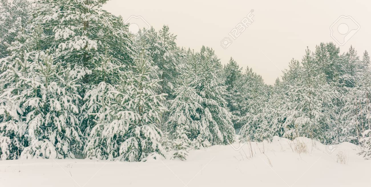 Wintry Landscape Scenery With Flat County And Woods, Snow Landscape ...
