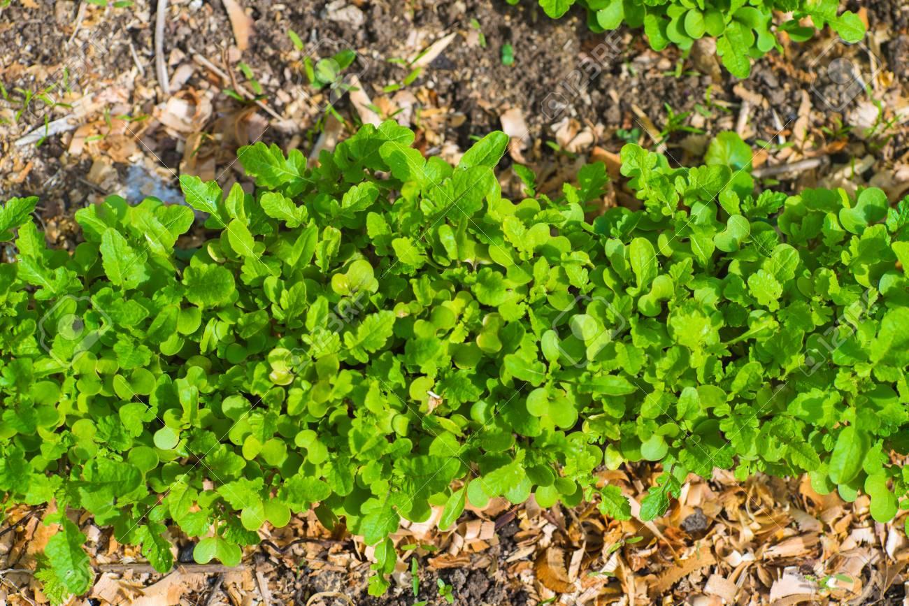 Garten Bett Nahaufnahme Landwirtschaft Gartenarbeit