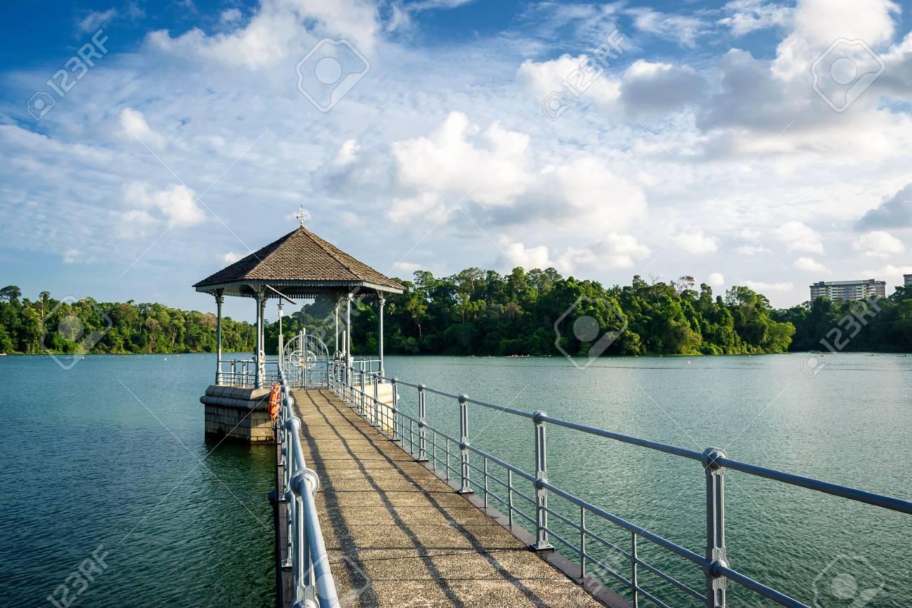 MacRitchie reservoir, - 58507130