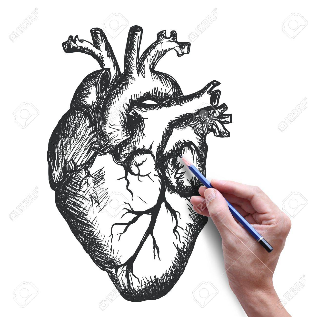 heart drawing on white background