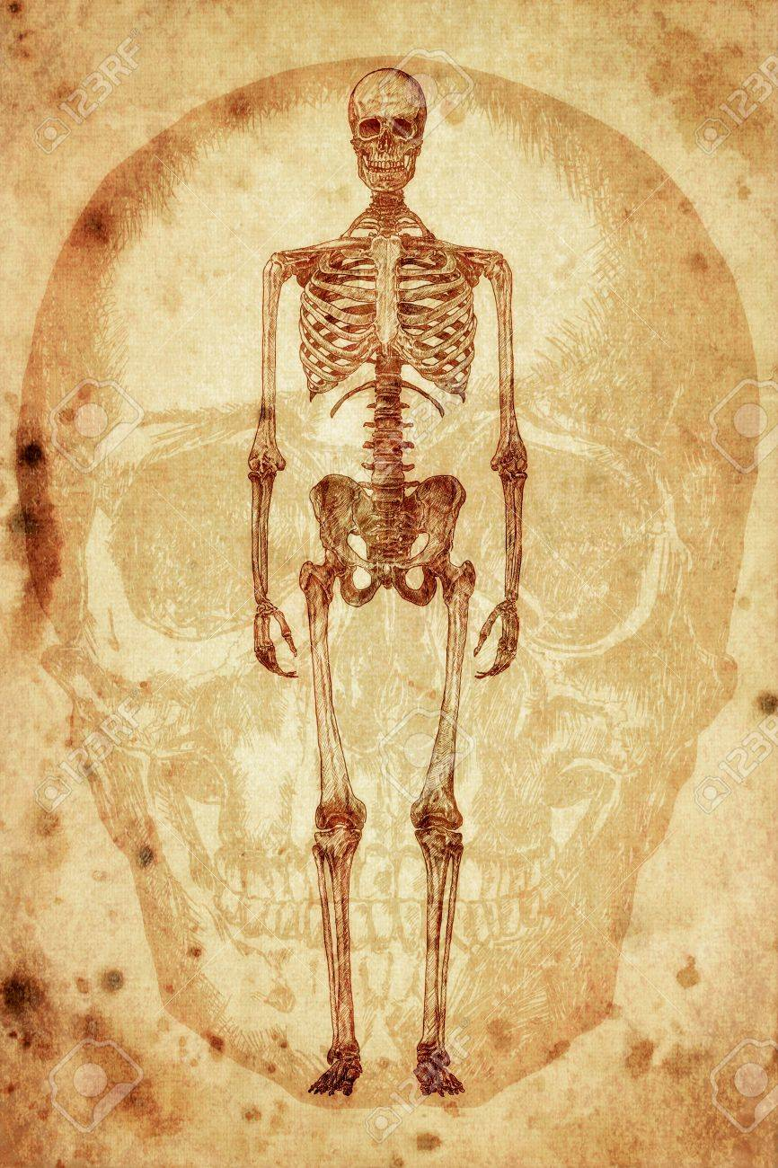 Cursory Drawing Human Skeleton On Old Paper Background Stock Photo