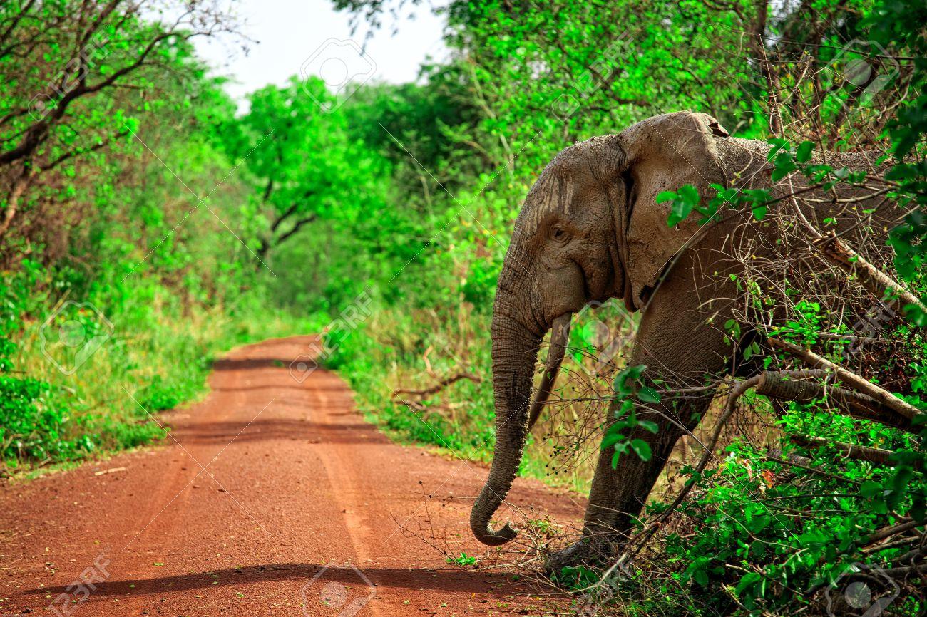 Resultado de imagen de parque nacional mole ghana