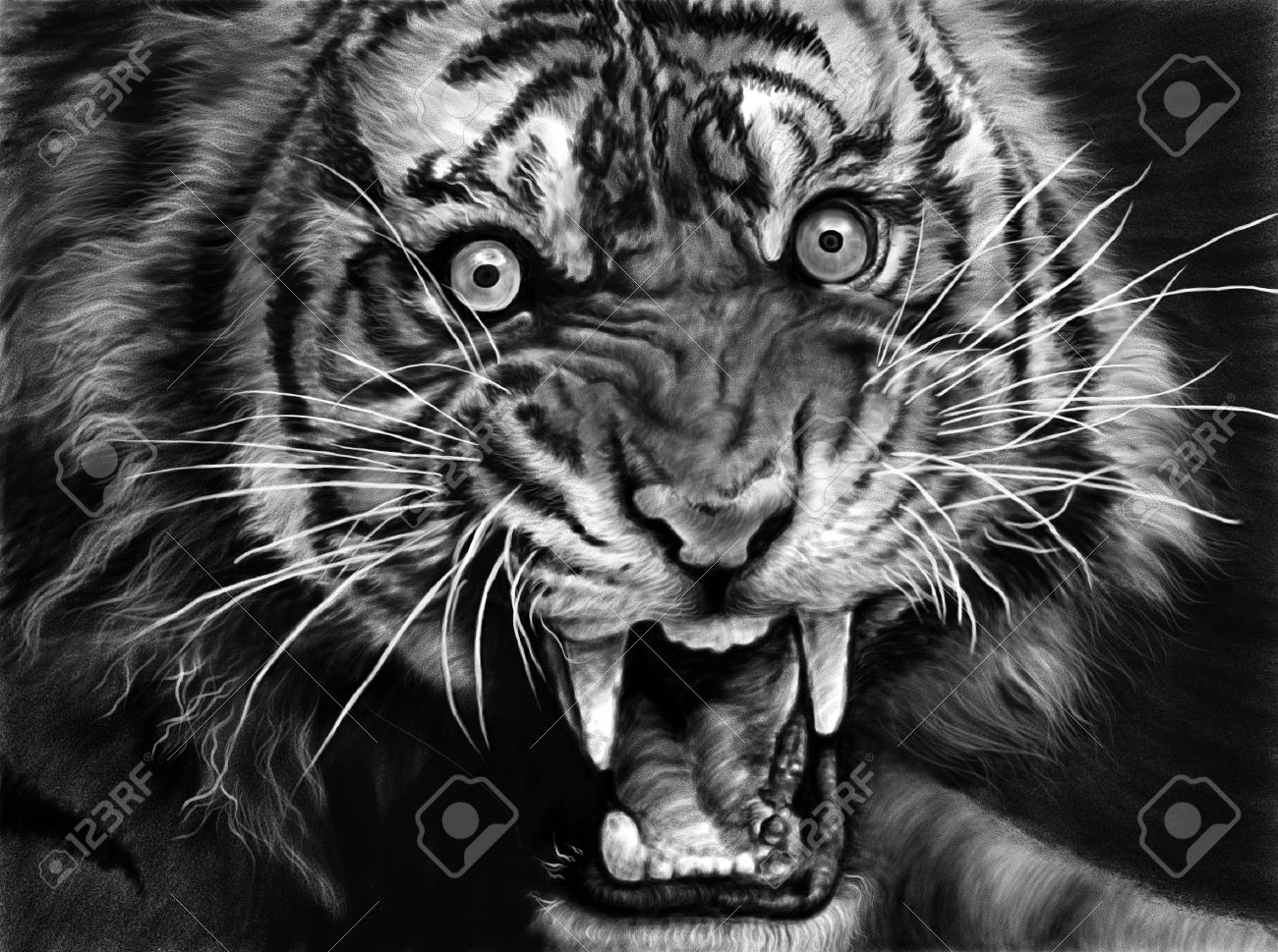 sketch of wild tiger in black and white stock photo, picture and
