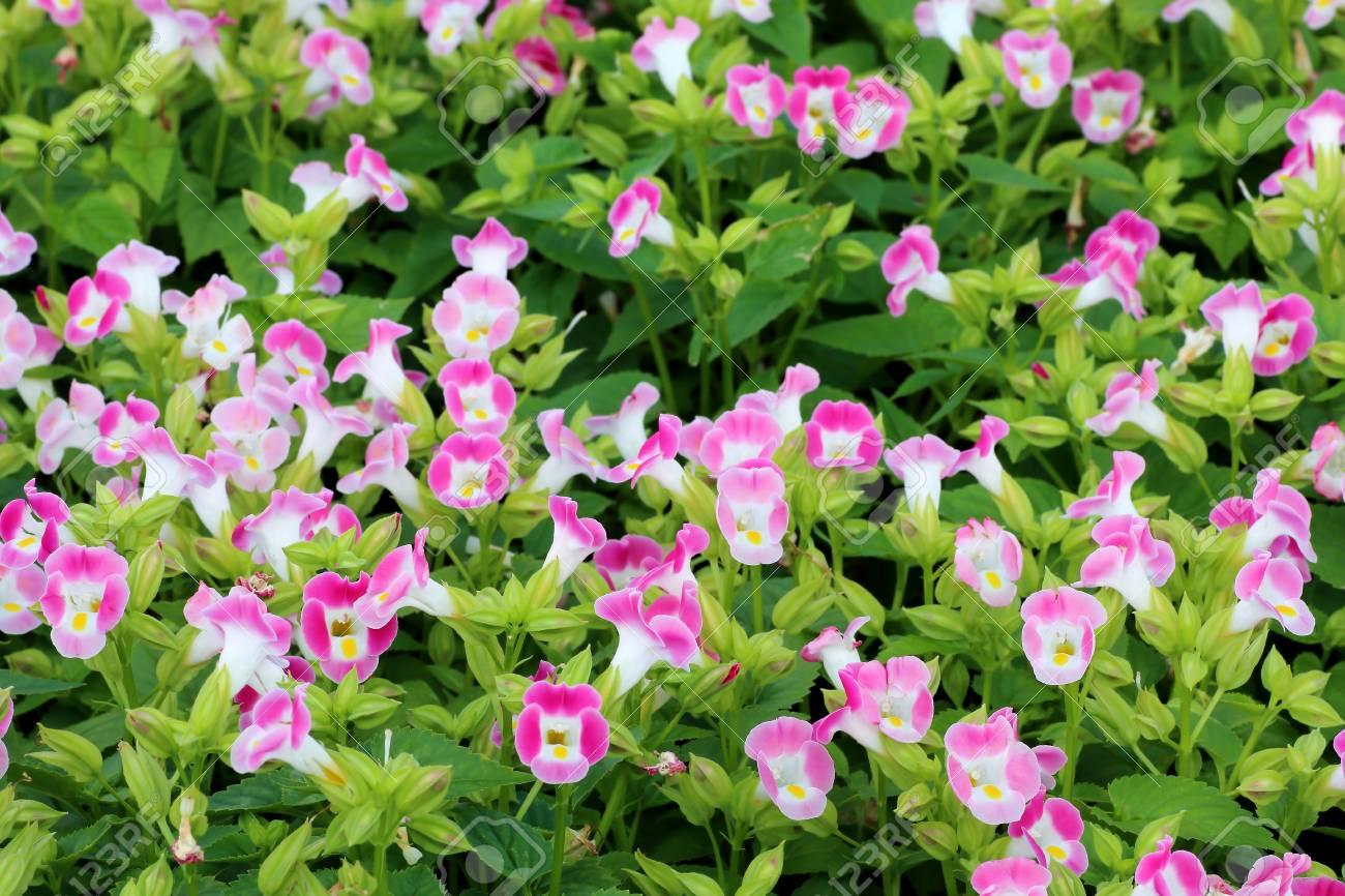 Small Pretty Flowers Blooming In The Garden Lizenzfreie Fotos